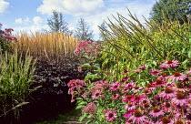 Echinacea 'Rubinstern', Cimicifuga ramosa 'Brunette', Calamagrostis × acutiflora 'Karl Foerster', Veronicastrum virginicum 'Temptation'