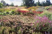 View over Millenium Garden, Hylotelephium 'Matrona' syn. sedum, Lythrum salicaria 'Zigeunerblut',  Echinacea purpurea 'Rubinstern'