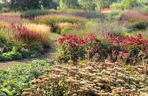 View over Millenium Garden, Hylotelephium 'Matrona' syn. sedum, Astilbe 'Purpurlanze', Deschampsia cespitosa 'Goldtau', persicaria, Echinacea purpurea 'Rubinstern'