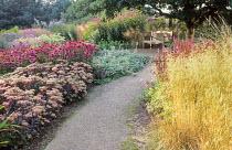 Path to wooden bench, Hylotelephium 'Matrona' syn. sedum, Echinacea purpurea 'Rubinstern'