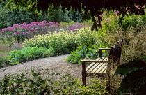 Wooden bench under oak tree, gravel path, Echinacea purpurea 'Green Edge', Eupatorium 'Atropurpureum'