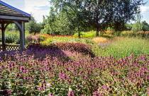 Monarda 'Mohawk' in prairie-style garden