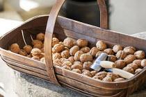 Harvested walnuts in wooden trug, nutcracker