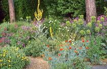 Gravel garden, verbascums, geranium, euphorbia, cistus, papaver, Glaucium flavum f. fulvum, rock roses