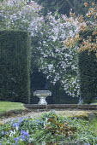 Stone urn, yew hedge