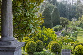 Clipped Buxus sempervirens, Taxus baccata, euphorbia