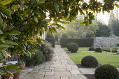 Magnolia, view along stone path, large clipped yew mounds, yew hedge
