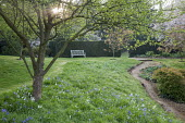 Mown grass path leading through orchard to bench, Hyacinthoides non-scripta naturalised in long grass