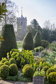 Clipped Buxus sempervirens, Taxus baccata, euphorbia, view to church