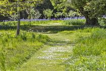 Daisies in mown grass path through long grass meadow