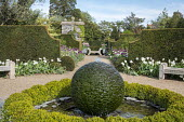 Circular clipped box hedge and Forget-me-not around bubbling stone sphere water feature, wooden benches, yew hedges, Tulipa 'Clearwater', gravel paths