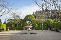 Fountain in gravel courtyard, hornbeam arbour, tulips in large terracotta pots