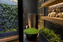 Tall pot, Soleirolia soleirolii in large pot on patio, deer skulls on shelf, Trachelospermum jasminoides climbing on wall, built-in wooden bench