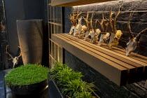 Tall pot, Soleirolia soleirolii in large pot on patio, deer skulls on shelf, mirror