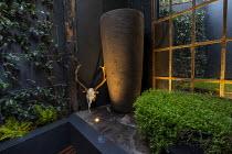Tall pot, Soleirolia soleirolii in large pot on patio, deer skull, Trachelospermum jasminoides climbing on wall, mirror