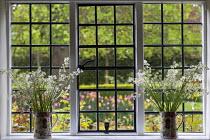 Cut Whitebells in jugs on windowledge, view through window
