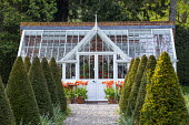 Gravel path leading to greenhouse, rows of clipped yew hedges, Tulipa 'Menton' in pots