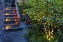 Candles on steps, uplit multi-stemmed shrub, black paving