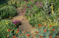 Gravel garden, Glaucium flavum f. fulvum, rock roses