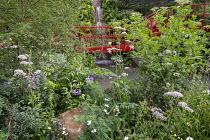 Valeriana officinalis, Libertia grandiflora, red painted bridge, Sambucus nigra, Solanum crispum, Nothofagus antarctica