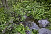 Small natural pond with stone edging, Ligularia 'Britt Marie Crawford', Trollius x cultorum 'Alabaster', Valeriana officinalis, aquilegia