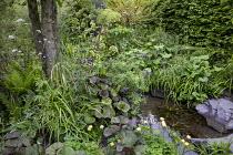 Small natural pond with stone edging, Ligularia 'Britt Marie Crawford', Trollius x cultorum 'Alabaster', Valeriana officinalis, aquilegia, Angelica archangelica