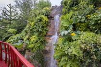 Araucaria araucana, waterfall, rock garden, Gunnera manicata, Adiantum raddianum 'Fragrantissimum'