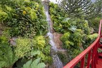Waterfall, Adiantum raddianum 'Fragrantissimum', Mimulus guttatus, Araucaria araucana