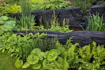 Blackened timber walls, Farfugium giganteum, Rodgersia pinnata, Polygonatum verticillatum, Dryopteris wallichiana, Cypripedium calceolus, Aralia cordata