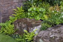 Large rocks surrounded by ferns, Blechnum cycadifolium, Dryopteris erythrosora, Pellaea rotundifolia