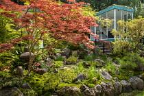Japanese garden, large rocks, Enkianthus campanulatus, Acer palmatum, Pinus mugo, glazed garden room, Iris sibirica 'Tropic Night'