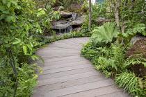Wooden boardwalk path, waterfall, gunnera