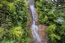 Waterfall over stone wall, Adiantum raddianum 'Fragrantissimum', Adiantum raddianum 'Fragrantissimum', Gunnera manicata, Calceolaria integrifolia
