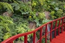 Red walkway by rock face, Lophosoria quadripinnata