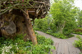Treehouse, ladder, timber path