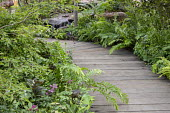Timber boardwalk path, ferns, waterfall