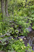Small natural pond with stone edging, Ligularia 'Britt Marie Crawford', Trollius x cultorum 'Alabaster', Angelica archangelica