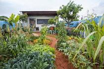 Tropical kitchen garden, Cavolo nero, Sorghum bicolor, Saccharum officinarum, tomato and beans on wigwams, nasturtiums, classroom, blackboard