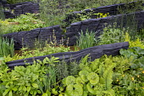 Blackened timber walls, Farfugium giganteum, Rodgersia pinnata, Polygonatum verticillatum, Dryopteris cycadina, Cypripedium calceolus, Aralia cordata