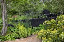 Trochodendron aralioides, Dryopteris cycadina, Darmera peltata, blackened oak walls, Osmunda regalis, Equisetum hyemale