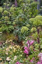 Angelica archangelica, Rosa 'Bonica', Eschscholzia californica 'Ivory Castle'