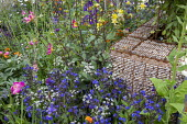 Stone-filled gabion wall, Anchusa azurea 'Loddon Royalist', Anthriscus sylvestris 'Ravenswing'