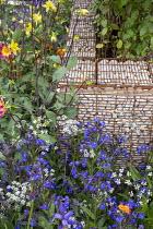 Anchusa azurea 'Loddon Royalist', Anthriscus sylvestris 'Ravenswing', Aquilegia chrysantha, dahlia