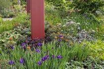 Iris sibirica 'Caesar's Brother', rodgersia, Anthriscus sylvestris 'Ravenswing', Euphorbia griffithii 'Fireglow'