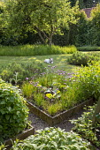 Allium schoenoprasum in square raised bed, Long grass meadow around apple tree, dog on lawn, lavender