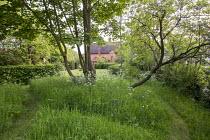 Mown grass path through wildflower meadow under trees