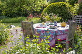 Teapot, cups and cake on table, vase of cut flowers, afternoon tea, tablecloth, dog on lawn, Centranthus ruber, Buxus sempervirens