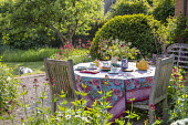 Teapot, cups and cake on table, vase of cut flowers, afternoon tea, tablecloth, Centranthus ruber, Buxus sempervirens, dog on lawn