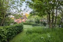 Mown grass path between hornbeam hedge and long grass meadow, Anthriscus sylvestris, wooden bench