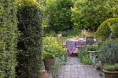 Clipped yew hedges, teapot, cups and cake on table, vase of cut flowers, afternoon tea, tablecloth, hosta in pot
